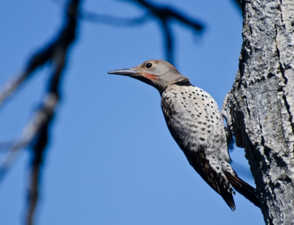 Preventing Woodpecker Repairs and Damage to Your Home
