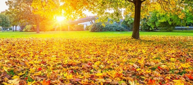 Preventing Water Damage: Don't Get Hosed This Fall